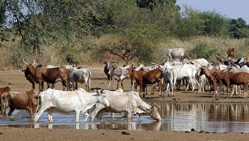 Die Zukunft der tierischen Erzeugung gestalten – nachhaltig, verantwortungsbewusst, leistungsfähig