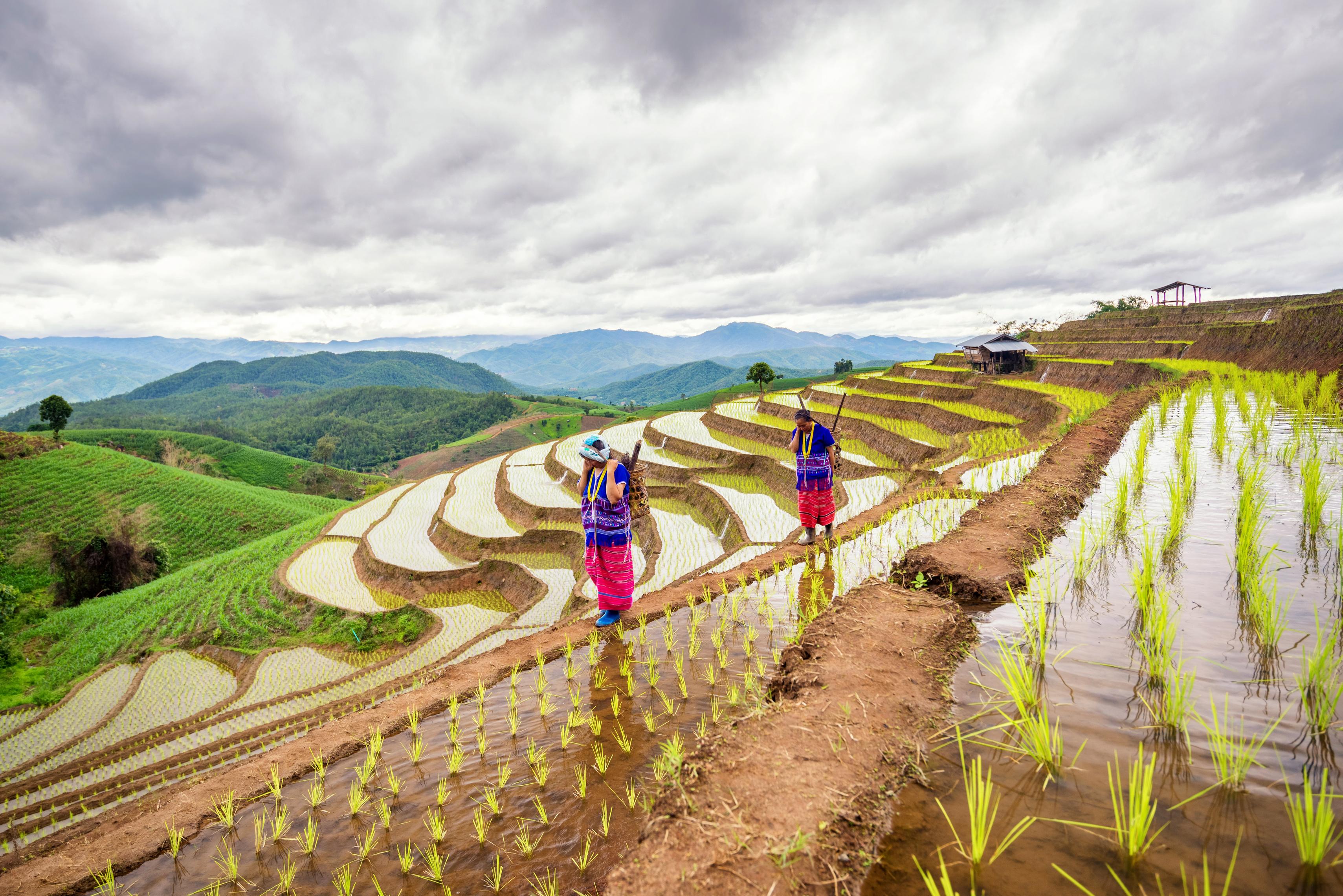GFFA 2017: Landwirtschaft und Wasser – Schlüssel zur Welternährung | Foto: © martinhosmat083 / Fotolia